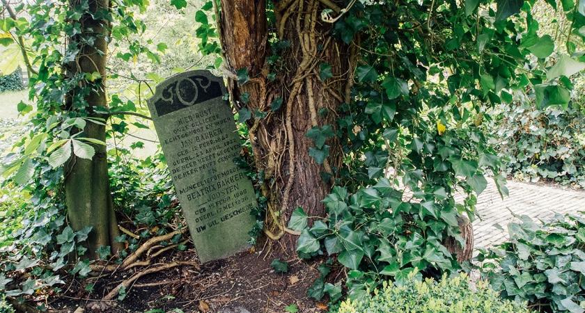Ignis Webmagazine Een Goede Begraafplaats Daar Knap Je
