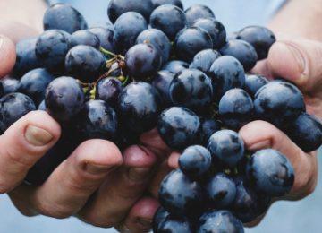 De wijnrank als metafoor van vrijheid.