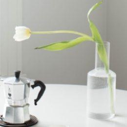 Witte tulp groeit naar licht, als een roeping