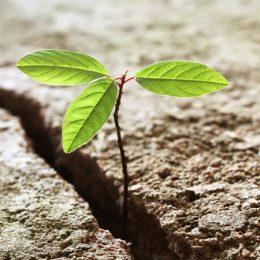 Veerkracht, bloem groeit in gescheurde aarde
