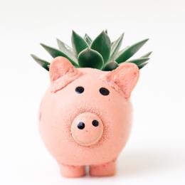 Ethisch beleggen, varken, spaarpot