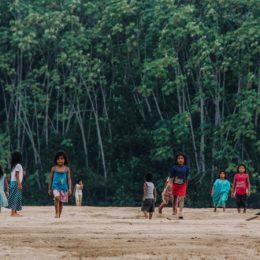 De drie grootste bedreigingen voor het Amazonewoud