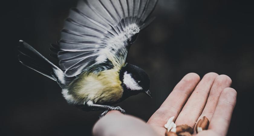 Vogeltelweekend maar dan net e anders ...